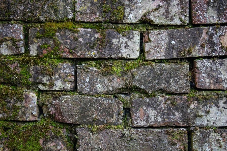 facade protection anti moss